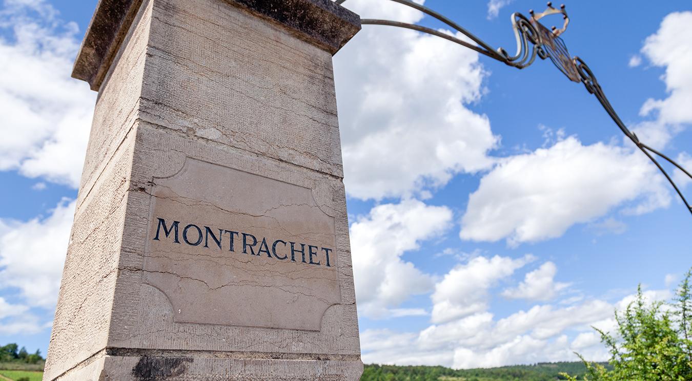 Montrachet Talking terroir